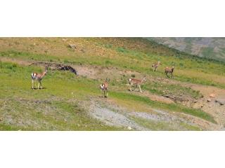 В Дахуа рассказали о своей помощи в сохранении дикой природы с помощью решений видеонаблюдения